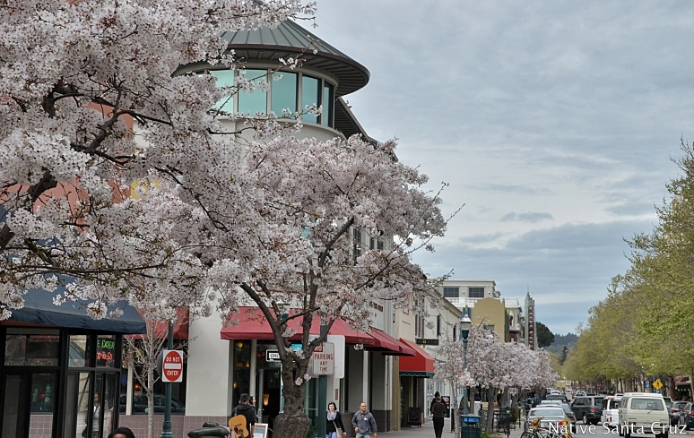 Spring in Downtown Santa Cruz