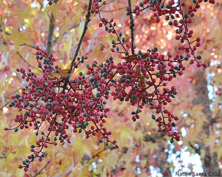 Fall, and soon to be, Christmas Colors