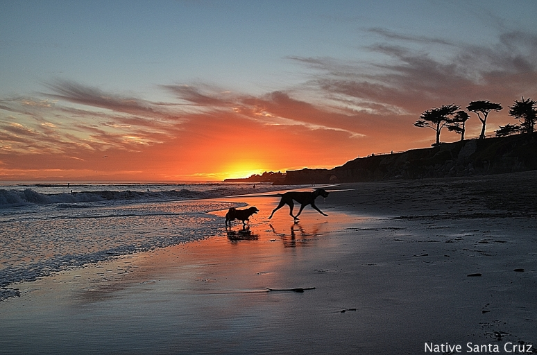 Its Beach Sunset Dogs