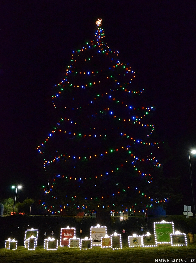 Scotts Valley Community Tree